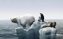 Những tấm hình giúp bạn nhận ra Trái đất đang lâm nguy đến mức độ nào