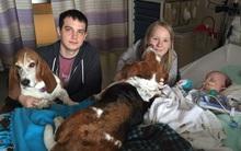 Câu chuyện ấm áp về chú chó không chịu rời cô chủ nhỏ khi em đang hấp hối trên giường bệnh