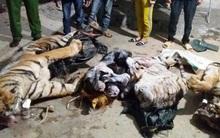 Hai con hổ nặng 300 kg trong tủ cấp đông ở trang trại bò