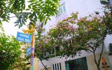 Xóm nước đen ngày ấy và chuyện 13 con đường mang tên các loài hoa ở khu Phan Xích Long Sài Gòn