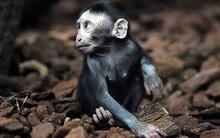 Hơn 700 loài vật đang đối mặt với nguy cơ tuyệt chủng. Nguyên nhân là...