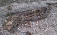 Xác sinh vật bí ẩn giống người cá dài gần 3m dạt vào bờ biển khiến người dân hoang mang
