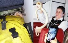 Đi máy bay, hành khách phát hoảng khi thấy rắn bò lồm ngồm ra khỏi túi xách