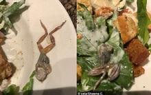 Phát hiện con ếch chết trên đĩa salad, thực khách không được bồi thường, lại còn phải trả tiền đồ uống