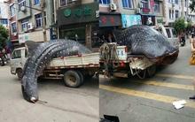 Bắt được cá nhám voi khổng lồ, ngư dân chở đi bán rong khắp phố trước sự ngỡ ngàng của mọi người