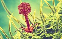 Khiến các siêu vi khuẩn tự sát là cách các nhà khoa học đối phó với thảm họa kháng kháng sinh