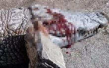 Sốc: Cá sấu bị khách tham quan ném đá đến chết