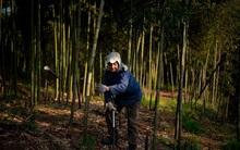 Rộn ràng mùa thu hoạch măng tươi ở Chiết Giang