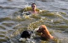 Người Hà Nội đưa chó xuống hồ Tây tắm cùng để giải nhiệt