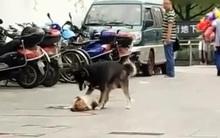 Chú chó tìm mọi cách đánh thức bạn bị xe đâm bê bết máu trên đường