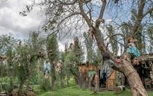 Cơn ác mộng Isla de las Munecas: Hòn đảo với hàng nghìn con búp bê kinh dị được treo lủng lẳng trên cây