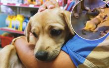 """Clip 2 chú chó bị kéo lê đến chảy máu trên đường phố và đoạn kết đẹp từ sự """"bao đồng"""" của người Sài Gòn"""