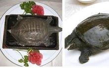"""Rùng mình với súp rùa sống - món ăn kinh dị và tàn nhẫn """"nức tiếng"""" Trung Quốc"""
