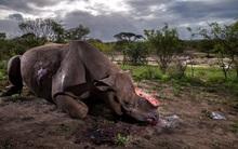 Nhìn lại những tác phẩm nhiếp ảnh xuất sắc giành giải thưởng World Press Photo 2017