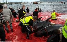 Hình ảnh bờ biển Đan Mạch nhuốm đỏ màu máu trong vụ thảm sát cá voi gây phẫn nộ trên toàn thế giới
