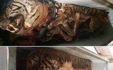 Phát hiện 5 con hổ vằn Đông Dương trong... tủ lạnh