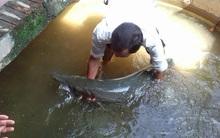 Mưa ngập cửa sổ, người dân ở Hà Nam bắt được cá sấu hỏa tiễn 28kg bơi vào nhà