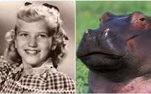 Không phải thú bông hay búp bê, hơn 6 thập kỷ trước cô bé này đã xin một con hà mã vào lễ Giáng sinh và làm một phen khuynh đảo thế giới