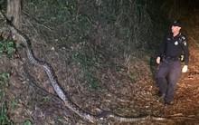 Đi tuần ban đêm, cảnh sát chạm trán con trăn khổng lồ dài tới hơn 5m bò ngang đường