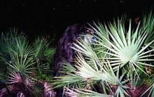 """Sinh vật bí ẩn trong lịch sử nước Mỹ: """"Skunk Ape"""" với cơ thể giống khỉ đột và có mùi hôi như chồn"""