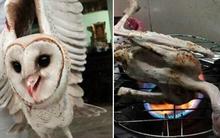 Thanh niên bắt được chim cú mèo, làm lông nướng ăn rồi chụp ảnh đăng lên mạng
