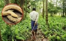 Thương những con rắn chết vì nắng nóng, chàng trai cần mẫn trồng cây cho đến gần 40 năm sau, kết quả bất ngờ đến không tưởng