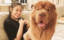Seolhyun khoe mặt mộc xinh tươi nhưng tất cả những gì fan thấy chỉ là chú chó khổng lồ đáng yêu
