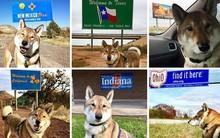 Chó cưng bị ung thư, Thị trưởng Massachusetts hủy hết lịch làm việc để đưa chú đi du lịch quanh nước Mỹ lần cuối cùng
