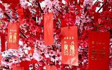 Cùng đón Tết Âm lịch nhưng ít ai biết rằng, ở Việt Nam và Trung Quốc cũng có nhiều điểm khác nhau lắm đấy