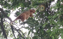 Thấy thứ gì đó treo lủng lẳng trên cây, người dân đến gần mới hoảng hốt nhận ra cảnh tượng đáng sợ