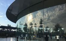 Nhân viên Apple liên tục đâm sầm vào kính vì 2 lý do hài hước, có người còn bị rách đầu phải gọi xe cứu thương