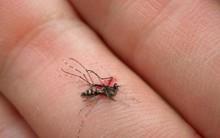 Hóa ra loài muỗi cũng biết sợ khi chúng ta làm điều này