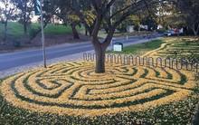 Nếu lười quét dọn, hãy nhìn cách ngôi trường này biến lá cây rụng thành tác phẩm nghệ thuật