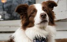 Câu chuyện về chú chó tranh cử Tổng thống Mỹ