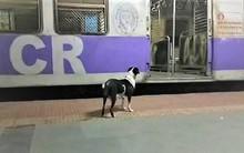 Mỗi đêm đều đợi cùng một chuyến tàu, đâu là bí mật của chú chó kì lạ này?