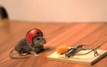 """Bẫy chuột thông minh cho dân Hi-Tech, kết nối cả Wi-Fi để báo đã """"sập mồi"""" thành công"""