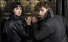 """9 bí mật đã được bật mí ngay trong trailer của """"Fantastic Beasts 2"""""""