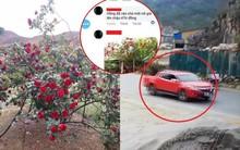 """Xuất hiện thông tin mới vụ """"cây hoa hồng đắt giá bị người lạ đánh ô tô vào tận nhà cuỗm mất"""""""