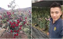 Đăng ảnh bụi hồng cổ mới bị đánh cắp lên Facebook, cuộc sống của nam thanh niên đảo lộn hoàn toàn vì bị vu oan là kẻ trộm hoa