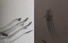Clip: Những vết bàn tay quẹt trên tường đầy ám ảnh trong chung cư Carina sau vụ cháy kinh hoàng 13 người chết