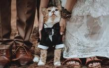 Boss bất ngờ chiếm spotlight trong bộ ảnh cưới của sen: Bọn cute này nguy hiểm quá đi mất!