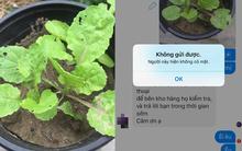 Chuyện thánh nhọ: Cô gái mua hạt hoa hồng về trồng lại mọc lên rau cải, vừa inbox phàn nàn đã ăn ngay cú block