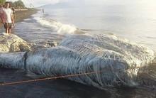 Sinh vật lông lá như đến từ ngoài hành tinh bất ngờ dạt vào bờ biển Philippines