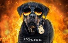 """""""Show Dogs"""" phải cắt bỏ cảnh phim vì cáo buộc """"lôi kéo"""" trẻ em vào hành vi lạm dụng tình dục"""
