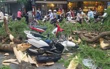 Sức khỏe của những nạn nhân bị cây đổ đè trúng ở Hà Nội giờ ra sao?