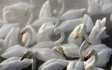 Những bức ảnh cực kỳ ấn tượng về các loài động vật trên khắp thế giới