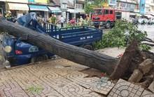 Hàng loạt cây xanh bật gốc đè nát ô tô, bảng hiệu bị hất bay tứ tung trên phố Sài Gòn vì gió lớn