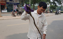 """Chuyên gia lý giải nguyên nhân rắn """"thi nhau xuất hiện"""" ở khu đô thị Linh Đàm"""