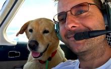 Người đàn ông bay hàng trăm chuyến trong suốt 3 năm, đón cả trăm chú chó từ bờ vực sinh tử về những gia đình mới