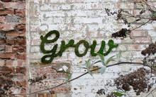 Người phụ nữ quét hỗn hợp rêu và sữa chua lên tường, vài ngày sau ai đi qua cũng trầm trồ vì quá kỳ diệu